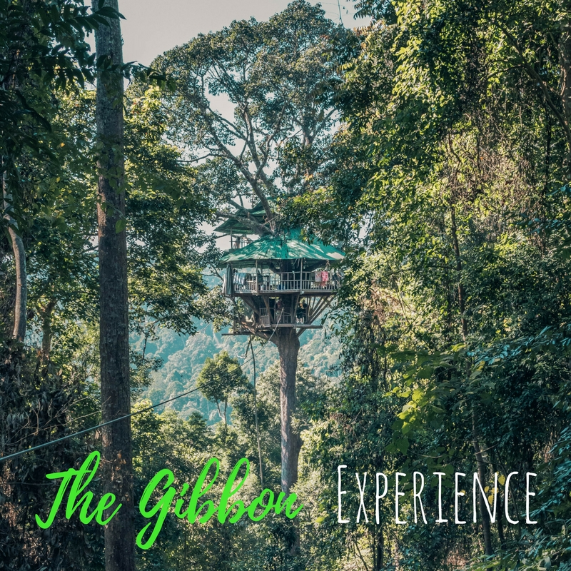 Childhood Dream Come True – The Gibbon Experience